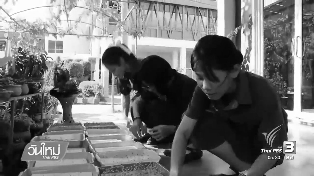 วันใหม่  ไทยพีบีเอส - เกษตรสมัยใหม่ แหล่งเรียนรู้ สร้างอาชีพ
