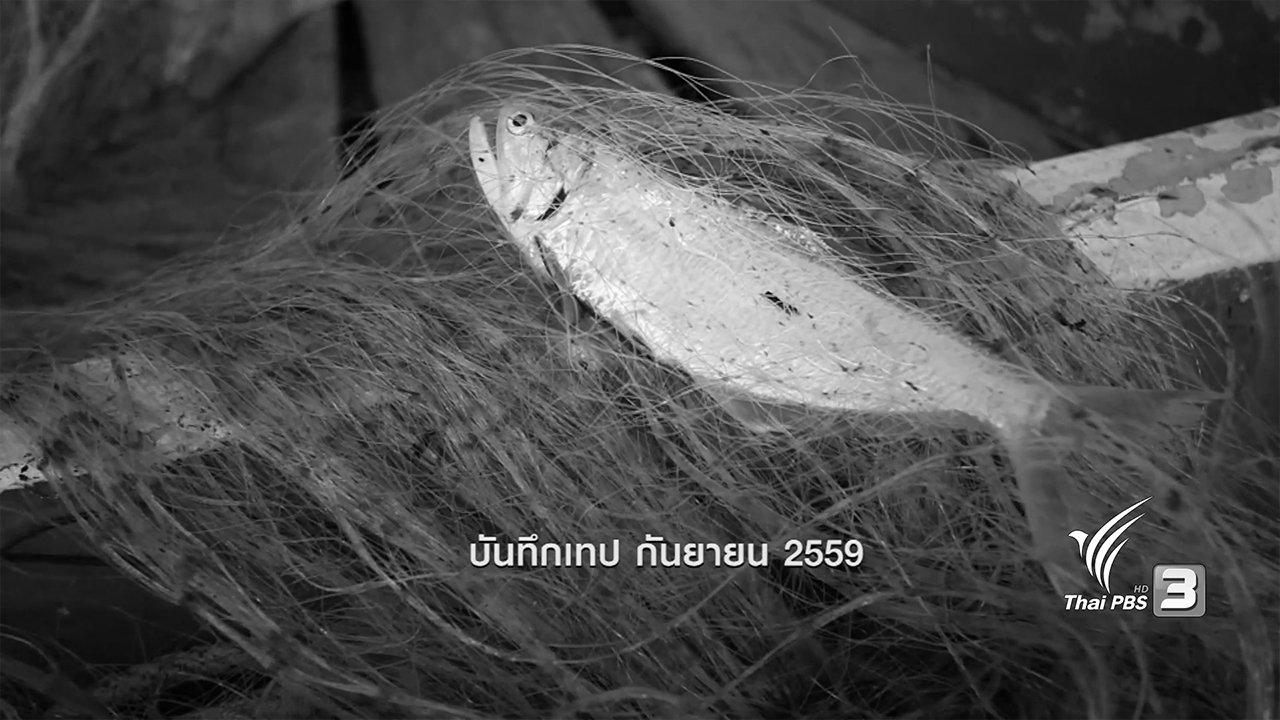 ข่าวค่ำ มิติใหม่ทั่วไทย - ตะลุยทั่วไทย : ปลาลูกแมว
