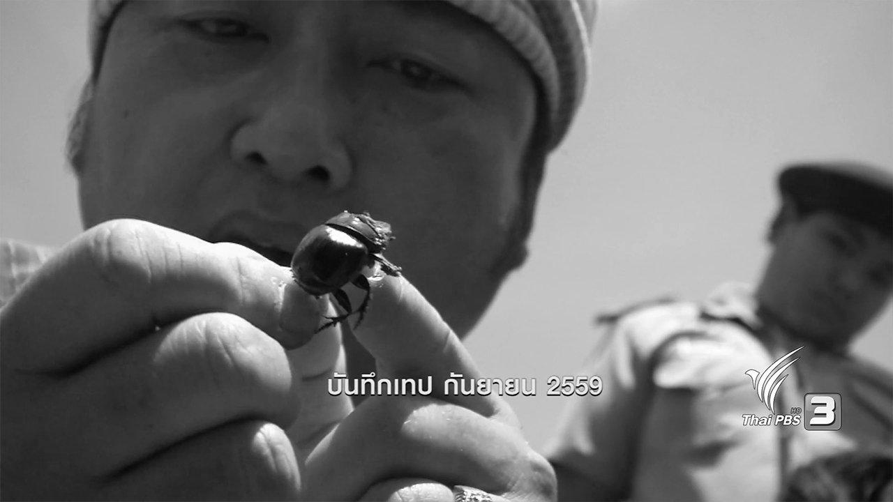 ข่าวค่ำ มิติใหม่ทั่วไทย - ตะลุยทั่วไทย : กุ๊ดจี่ขี้ควาย