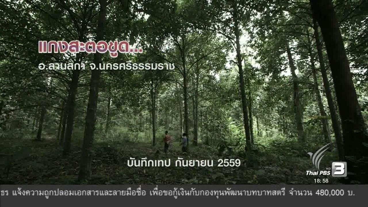 ข่าวค่ำ มิติใหม่ทั่วไทย - ตะลุยทั่วไทย : แกงสะตอขูด