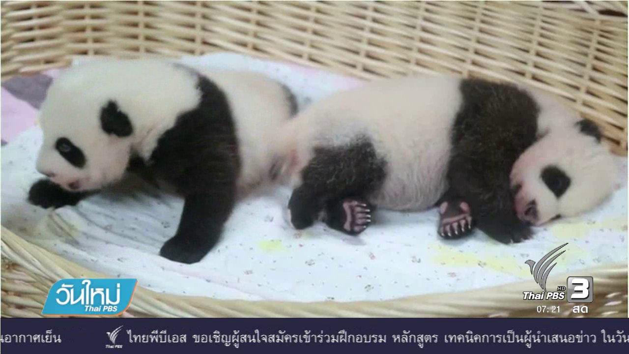 วันใหม่  ไทยพีบีเอส - เปิดตัวลูกแพนด้าแฝดในจีน