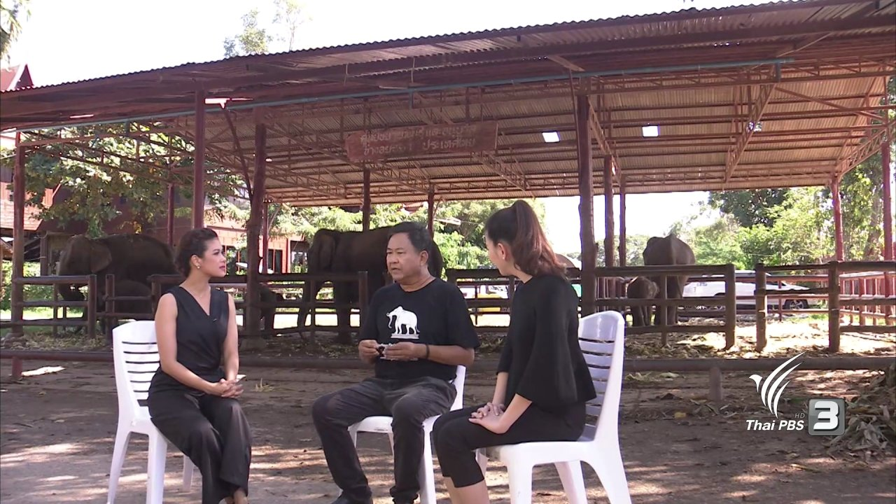 นารีกระจ่าง - มูลนิธิพระคชบาลกับช้างไทย