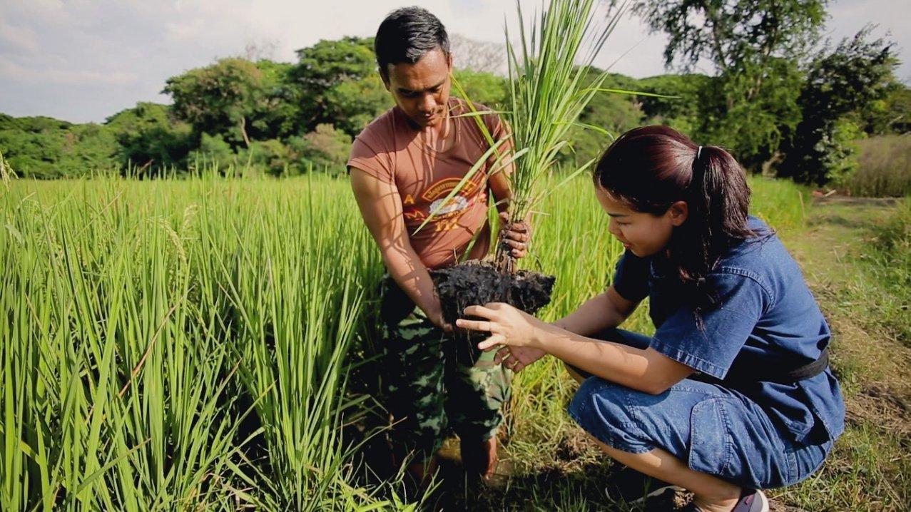 ปลูกวันแม่ เกี่ยววันพ่อ - เกษตรกรแนวคิดใหม่