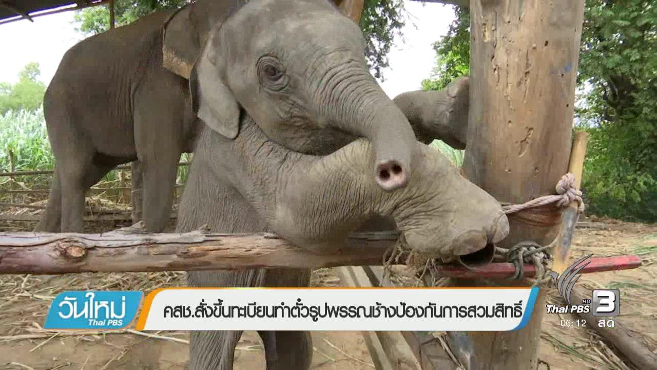 วันใหม่  ไทยพีบีเอส - คสช.สั่งขึ้นทะเบียนทำตั๋วรูปพรรณช้างป้องกันการสวมสิทธิ์