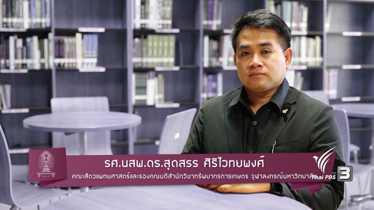 ข่าวค่ำ มิติใหม่ทั่วไทย - การทำหมันแมวดีหรือไม่
