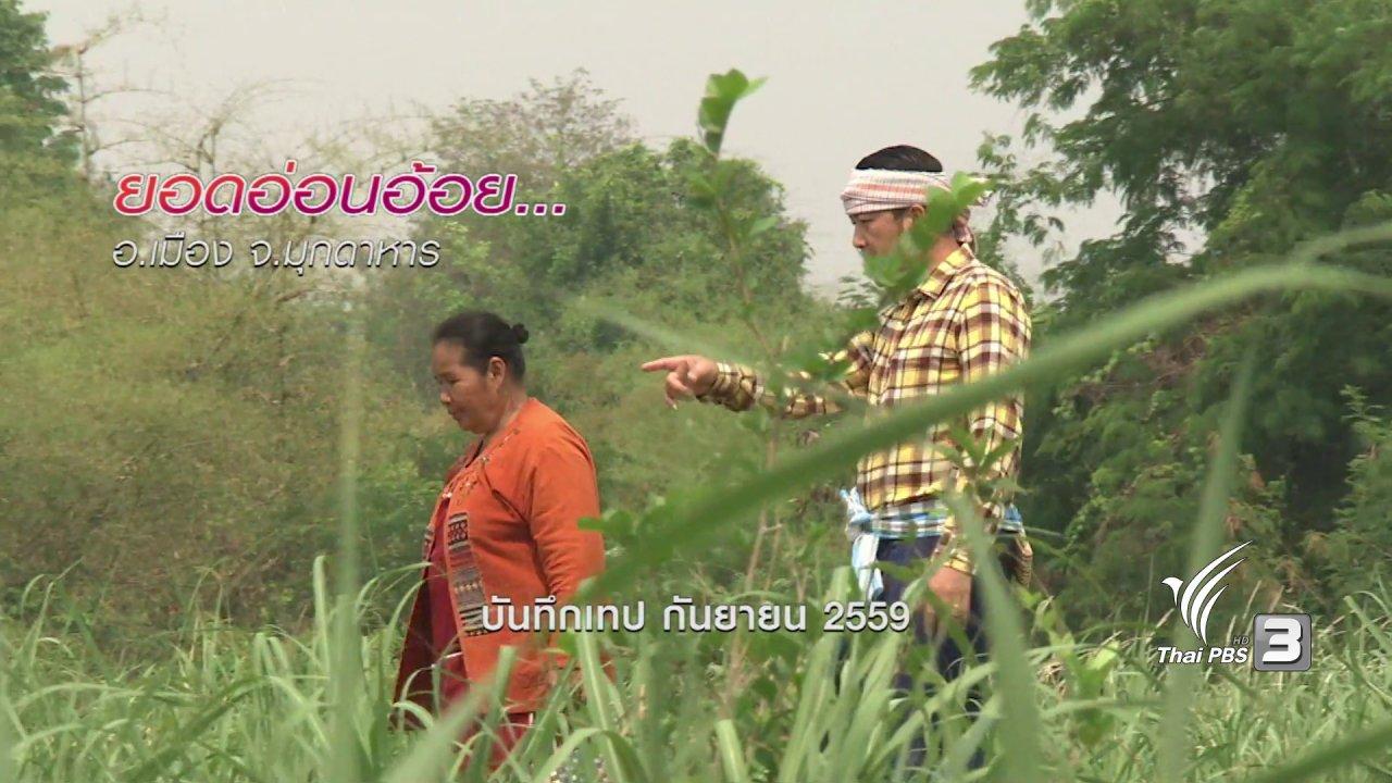 ข่าวค่ำ มิติใหม่ทั่วไทย - ตะลุยทั่วไทย : ยอดอ่อนอ้อย