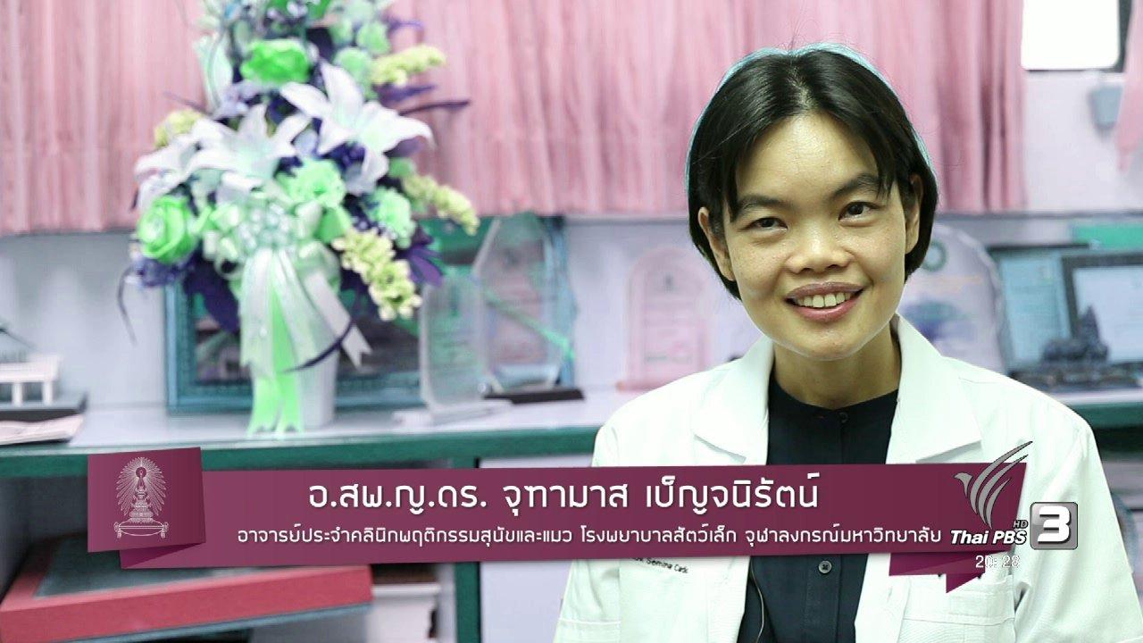 ข่าวค่ำ มิติใหม่ทั่วไทย - soเชี่ยว FAKE or FACT : แมวกับคนสามารถสื่อสารกันได้จริงหรือไม่