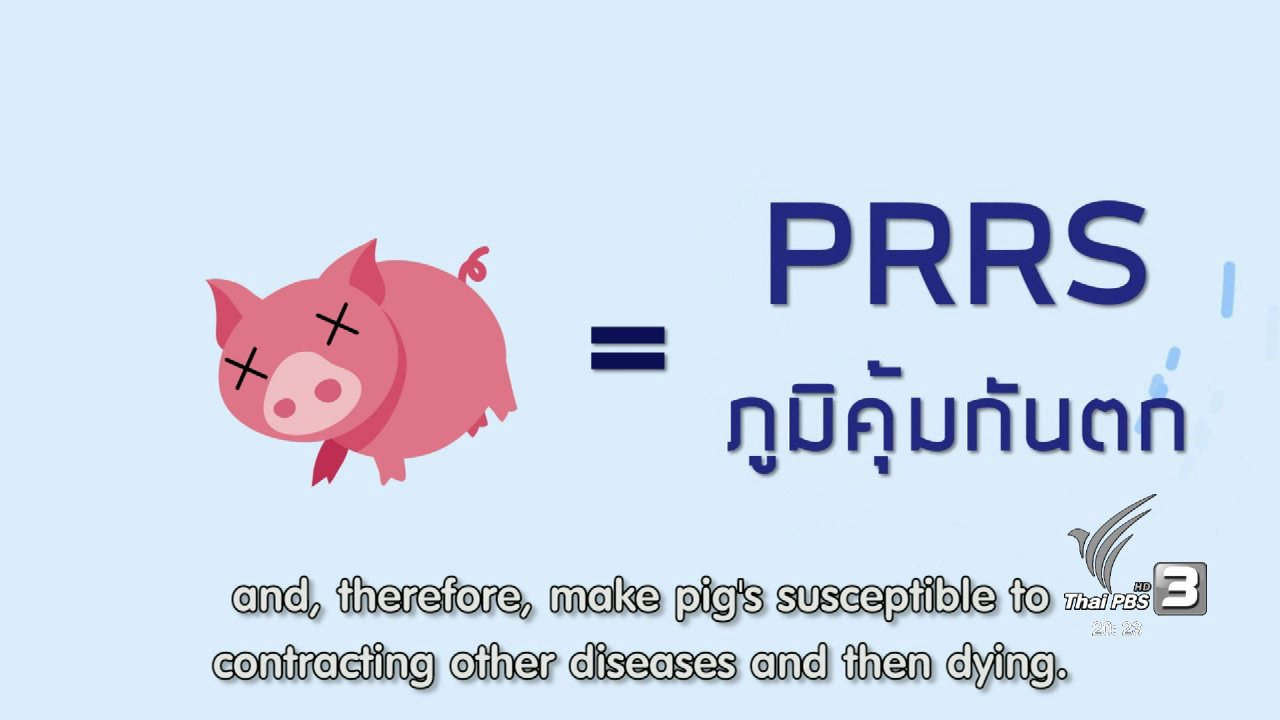 ข่าวค่ำ มิติใหม่ทั่วไทย - soเชี่ยว FAKE or FACT : ห้ามกินหมูและไก่ เนื่องจากเป็นเอดส์หมูหรือเอดส์ไก่ จริงหรือไม่