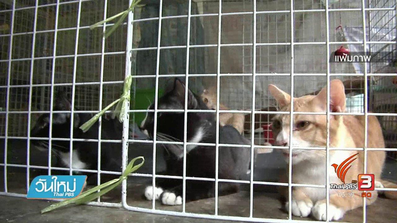 วันใหม่  ไทยพีบีเอส - กรมควบคุมโรคแจงคนถูกแมวกัดเนื้อเน่า