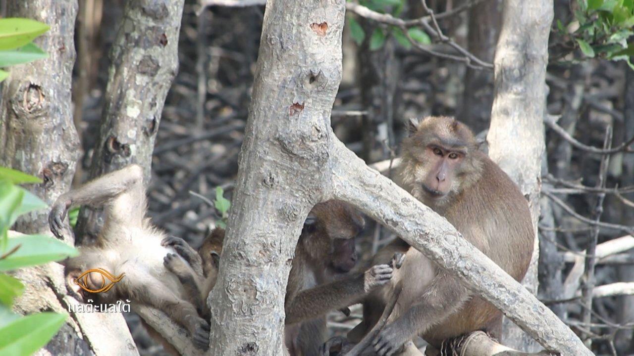 แลต๊ะแลใต้ - มีเล มีลิง