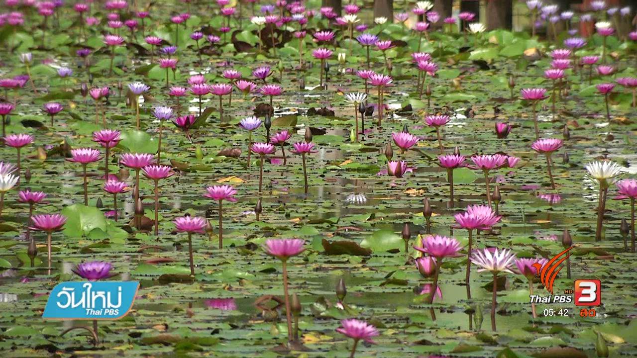 วันใหม่  ไทยพีบีเอส - อุทยานบัวเฉลิมพระเกียรติ ม.เกษตรศาสตร์ จ.สกลนคร