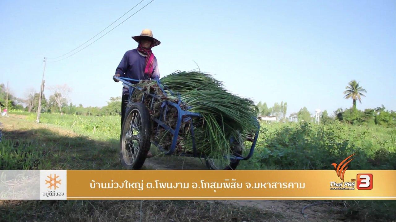 อยู่ดีมีแฮง - เกษตรปลอดภัย ม่วงใหญ่กินยาว