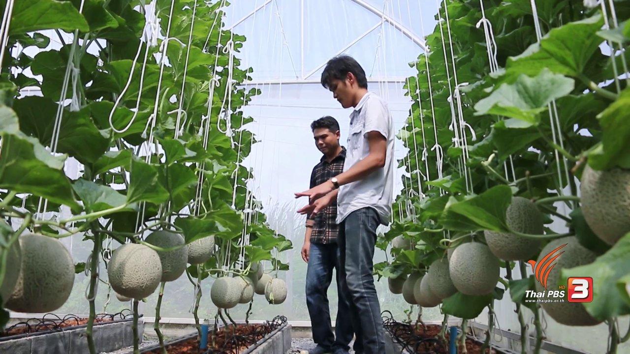 นารีกระจ่าง - เกษตรข้างบ้าน : พนักงานประจำกับฟาร์มเมล่อน