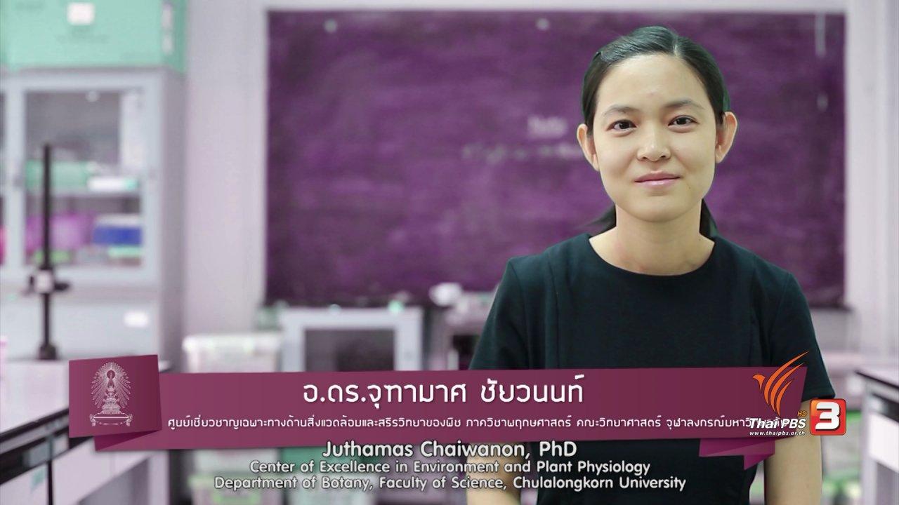 ข่าวค่ำ มิติใหม่ทั่วไทย - soเชี่ยว FAKE or FACT : พืชรู้สึกเจ็บปวดและส่งเสียงร้องได้จริงหรือไม่