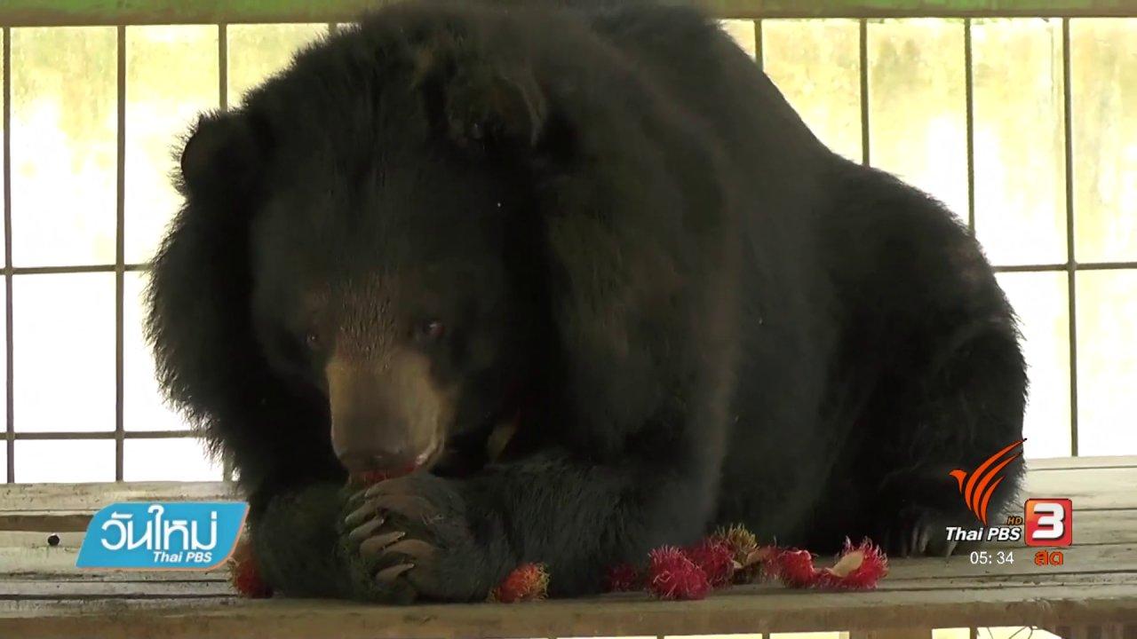 วันใหม่  ไทยพีบีเอส - หมีควายที่สำนักสงฆ์ตะปบคนบาดเจ็บสาหัส