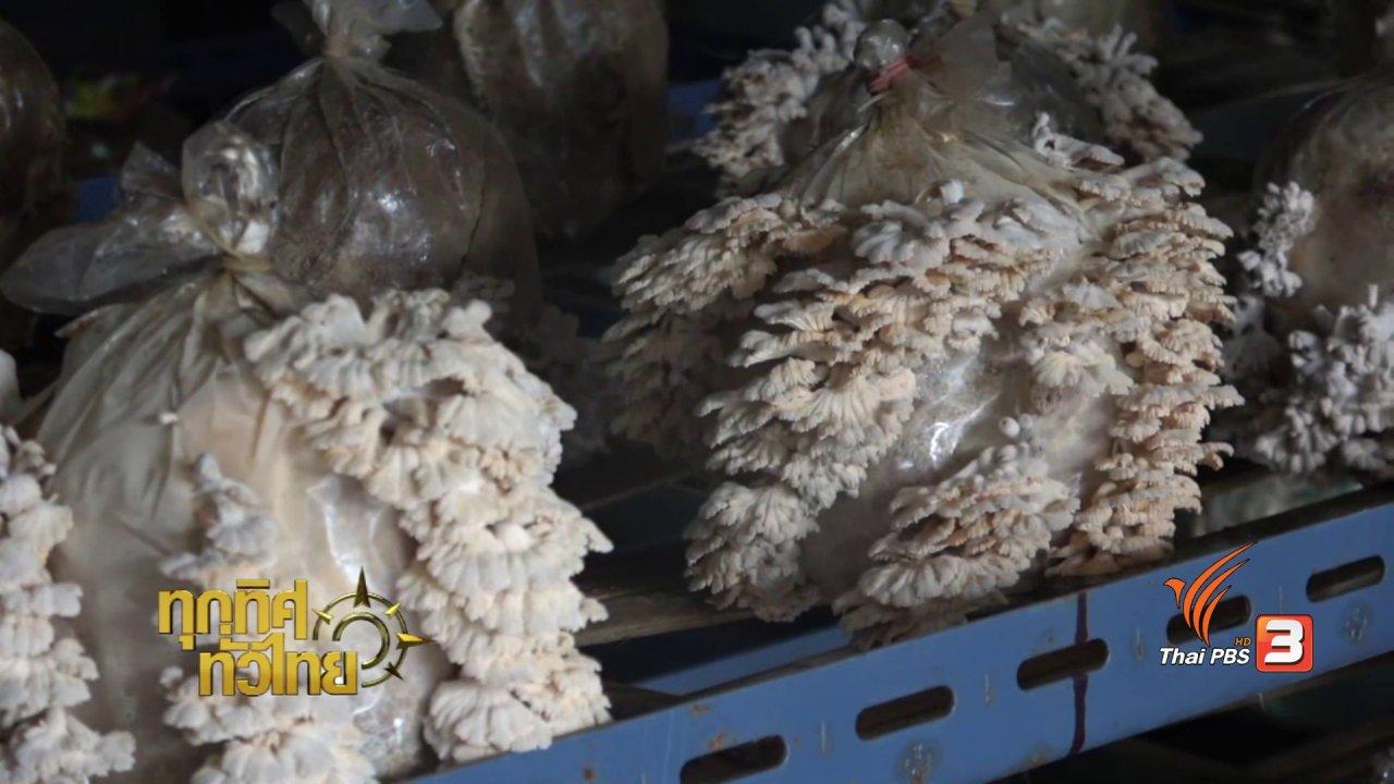 ทุกทิศทั่วไทย - อาชีพทั่วไทย : การเพาะเห็ดแครงอินทรีย์