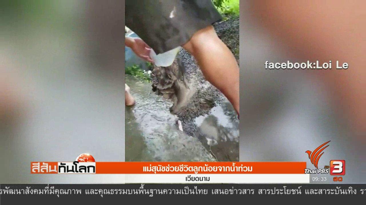 สีสันทันโลก - แม่สุนัขช่วยชีวิตลูกน้อยจากน้ำท่วม
