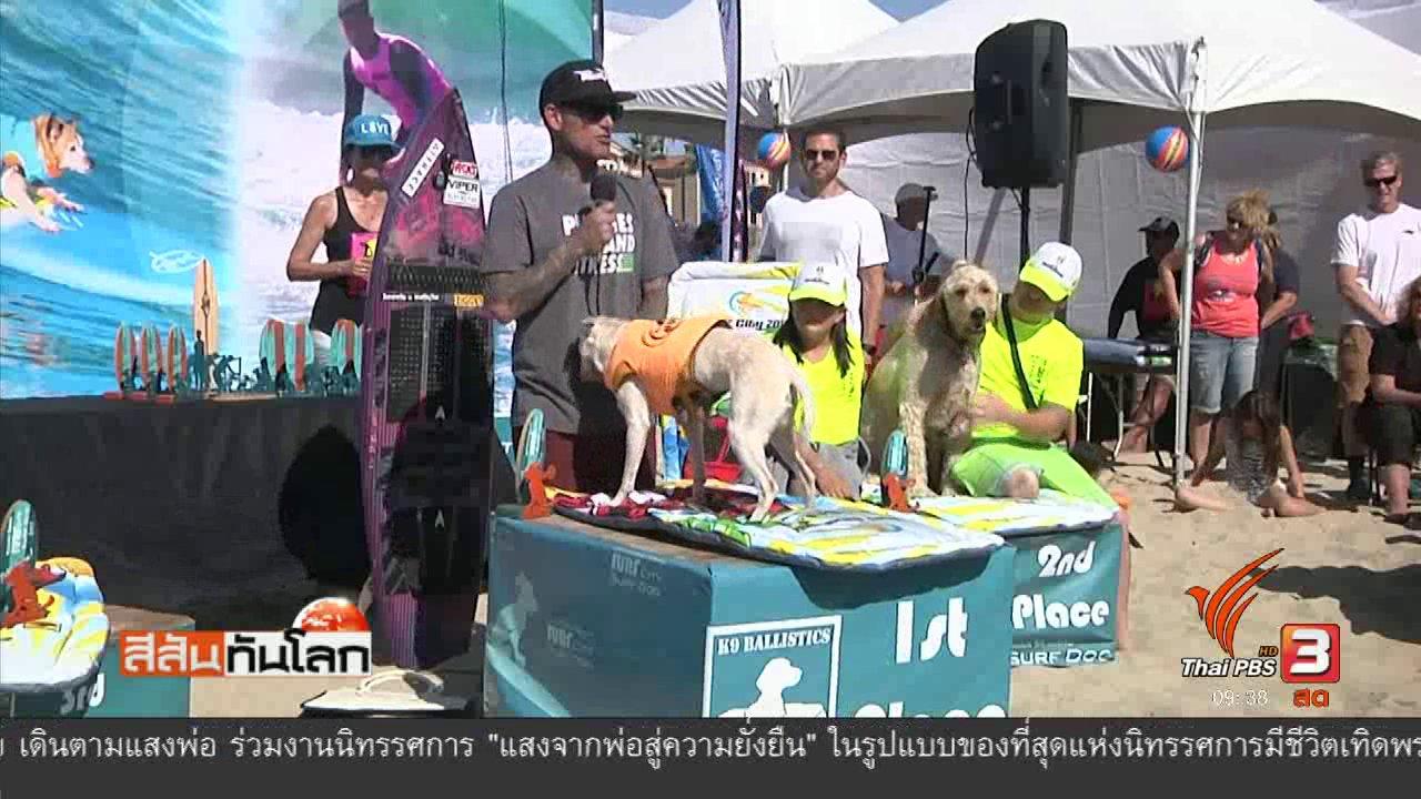 สีสันทันโลก - แข่งสุนัขเล่นกระดานโต้คลื่น