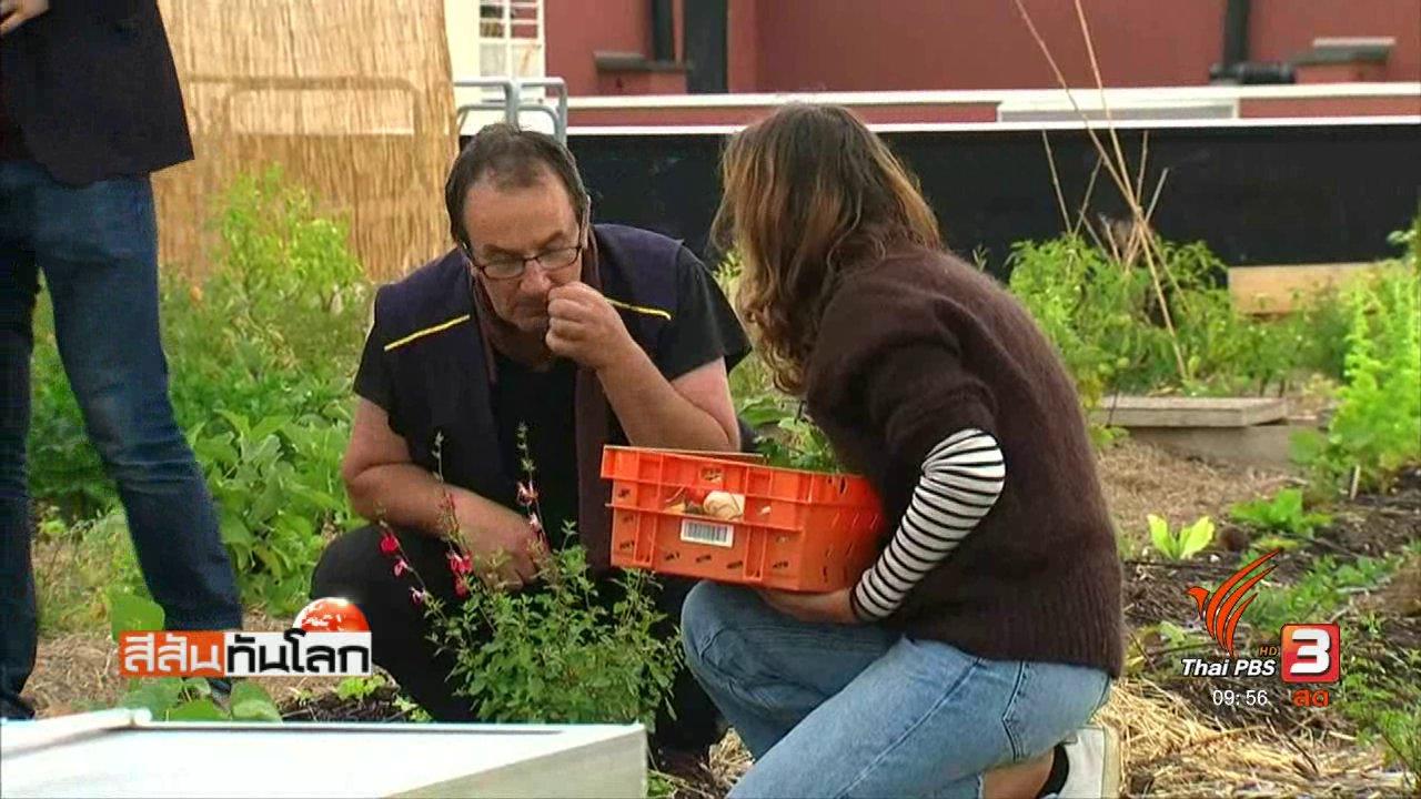 สีสันทันโลก - ทำฟาร์มปลูกผักบนดาดฟ้า