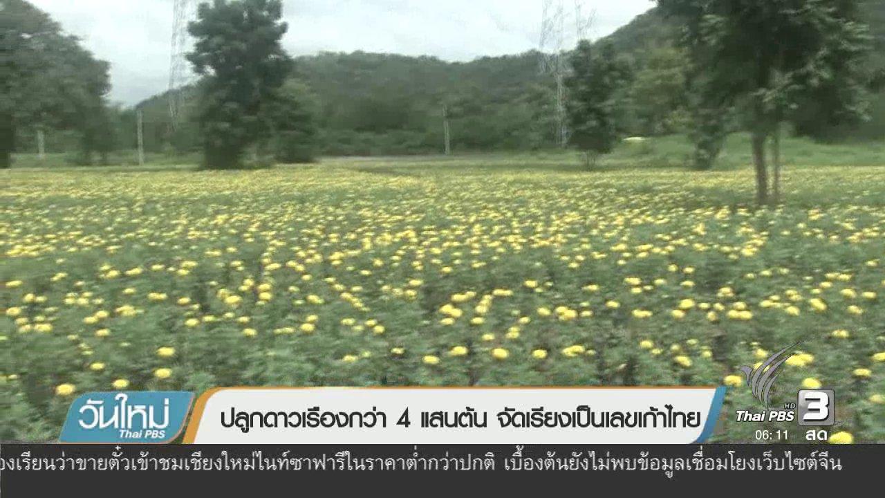 วันใหม่  ไทยพีบีเอส - ปลูกดาวเรือกว่า 4 แสนต้น จัดเรียงเป็นเลขเก้าไทย
