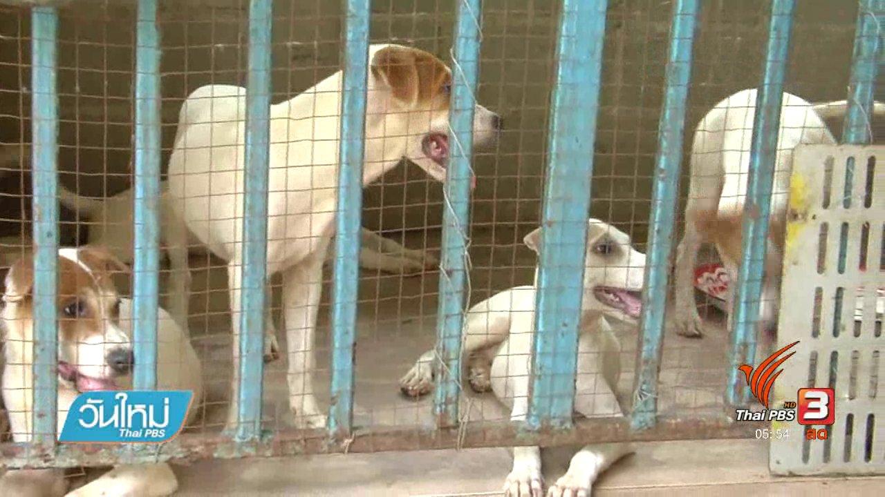 วันใหม่  ไทยพีบีเอส - หนุ่มปทุมเก็บสุนัขพิการมาเลี้ยงเกือบ 50 ตัว