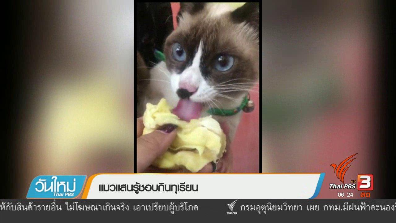 วันใหม่  ไทยพีบีเอส - แมวแสนรู้ชอบกินทุเรียน