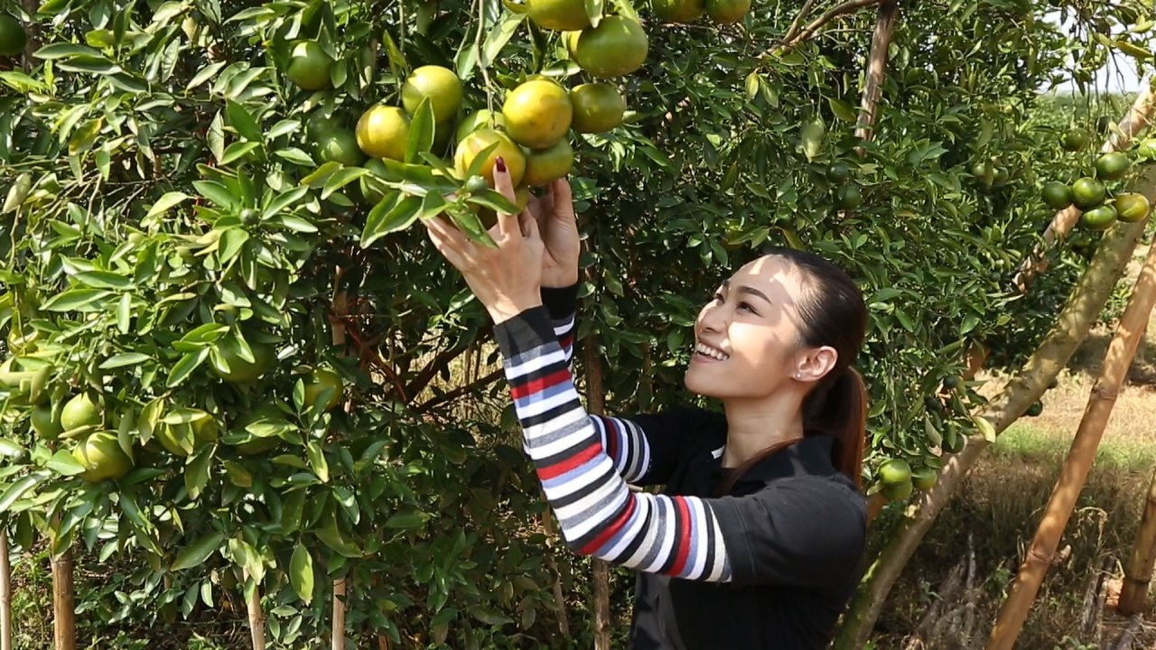 คนสู้โรค - เก๋ายกก๊วน : ลุยสวนส้ม ชมเกษตรผสมผสาน
