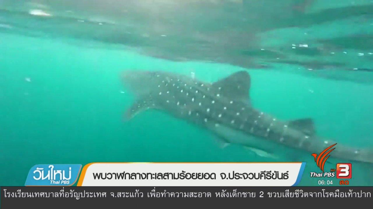 วันใหม่  ไทยพีบีเอส - พบฉลามวาฬกลางทะเลสามร้อยยอด จ.ประจวบคีรีขันธ์