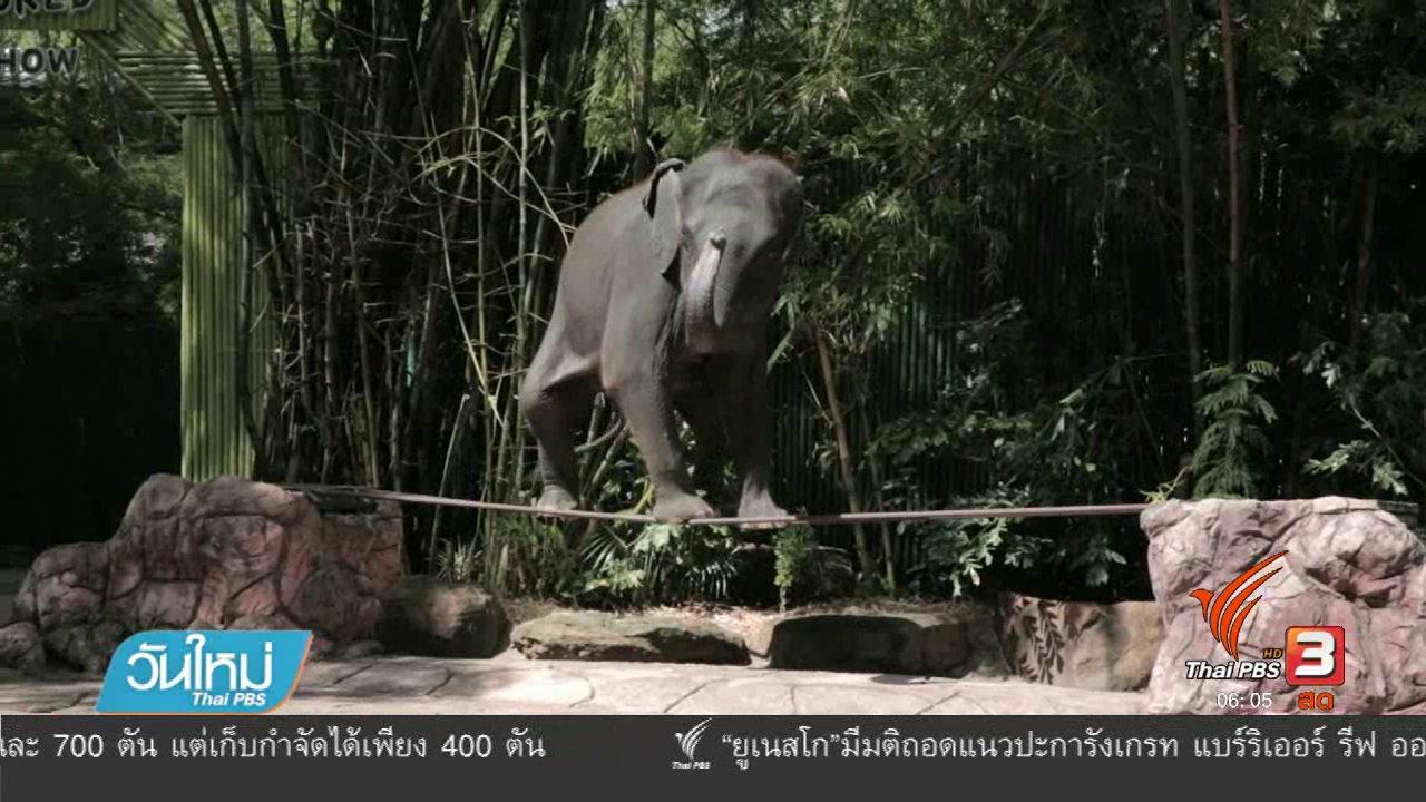วันใหม่  ไทยพีบีเอส - องค์กรพิทักษ์สัตว์เตือนช้างเอเชียมีความเป็นอยู่เลวร้าย