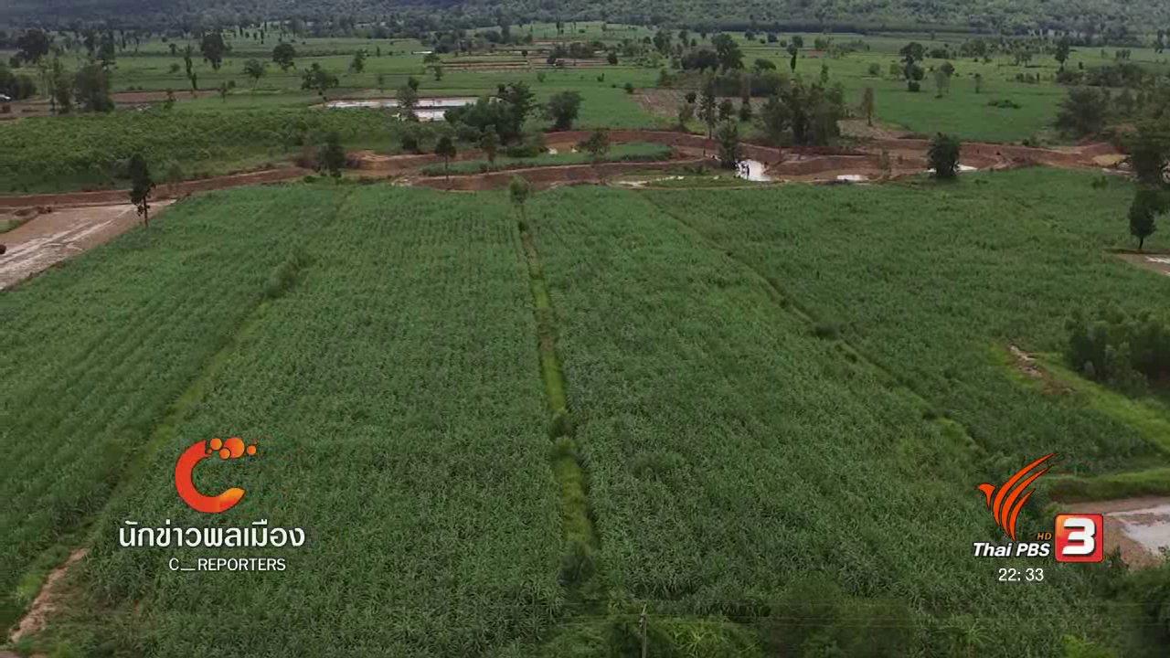 """ที่นี่ Thai PBS - นักข่าวพลเมือง : """"เกษตรอินทรีย์ส่งเสริมสุขภาพ"""" บ้านเทพคีรี จ.หนองบัวลำภู"""