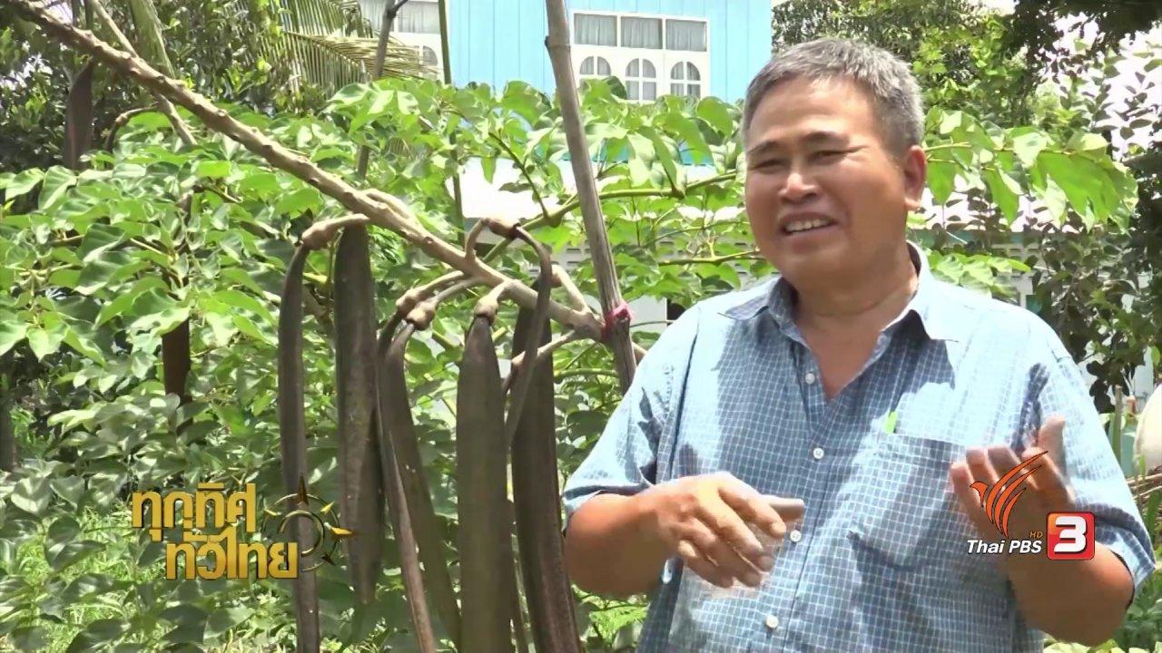 ทุกทิศทั่วไทย - อาชีพทั่วไทย : เพาะพันธุ์ต้นเพกาพันธุ์เตี้ย
