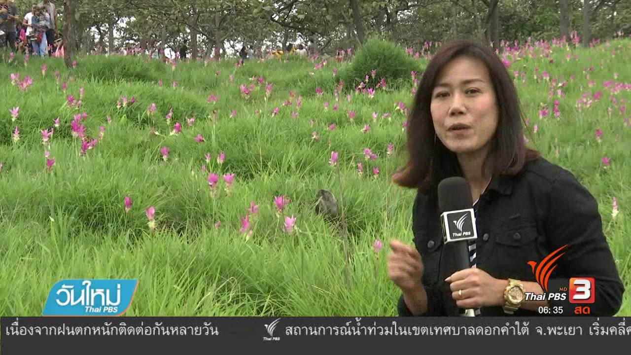 วันใหม่  ไทยพีบีเอส - นักท่องเที่ยวแห่ชมทุ่งดอกกระเจียวในรอบ 5 ปี