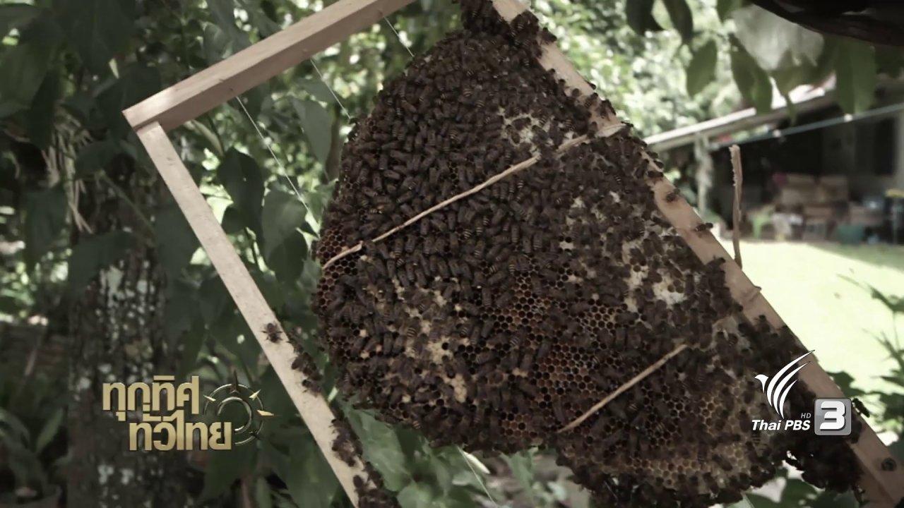 ทุกทิศทั่วไทย - จุฑามาศ พาตะลุย : เลี้ยงผึ้งแบบเก็บน้ำผึ้งได้เกือบตลอดทั้งปี