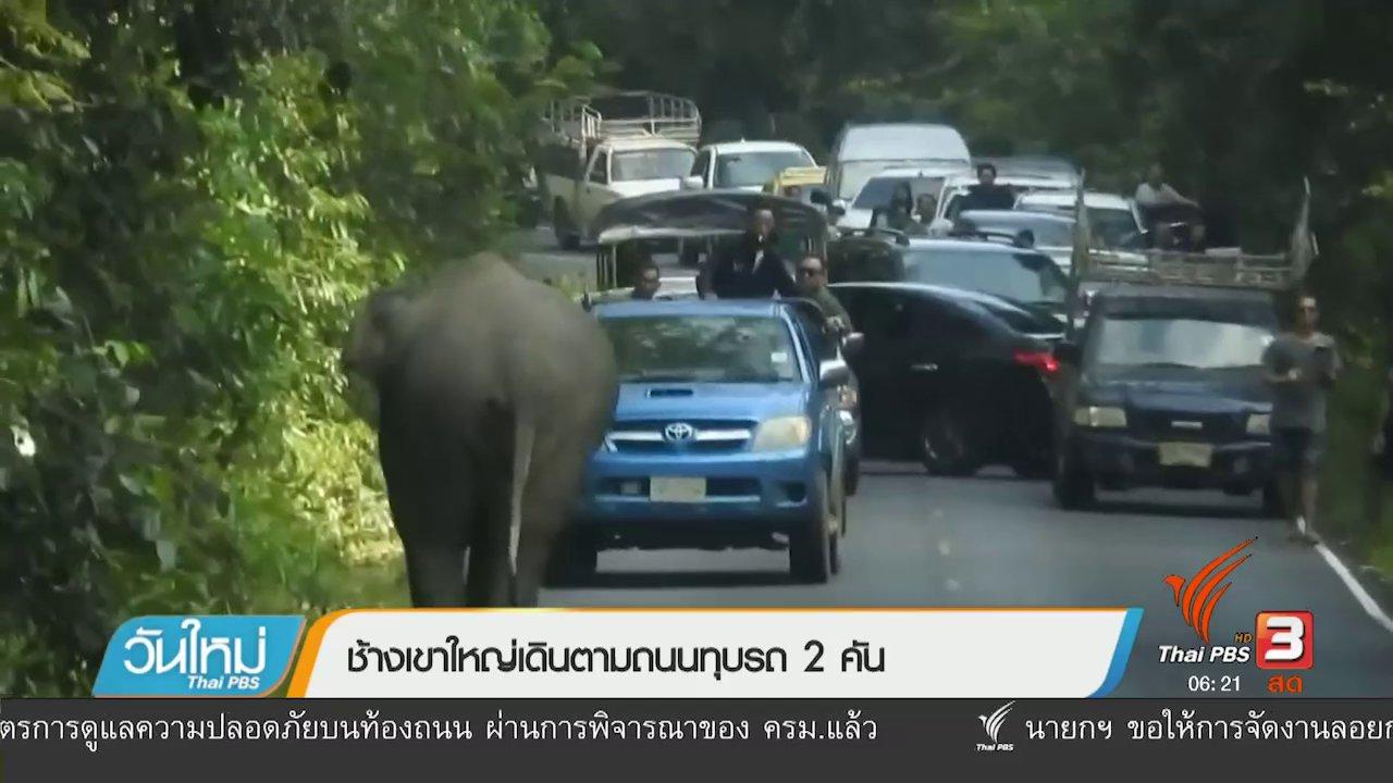 วันใหม่  ไทยพีบีเอส - ช้างเขาใหญ่เดินตามถนนทุบรถ 2 คัน