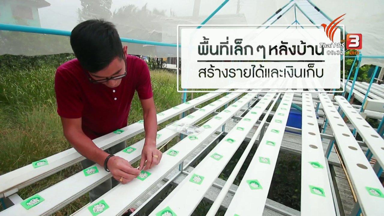 นารีกระจ่าง - เก็บเบี้ยให้ถึงล้าน : ปลูกผักหลังบ้าน
