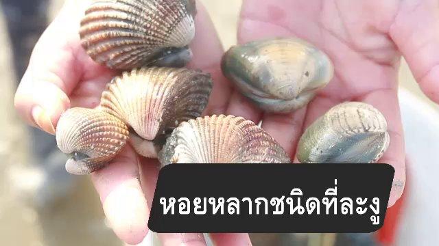 กินอยู่...คือ - สูตรลับออนไลน์ : หอยหลากชนิดที่ละงู