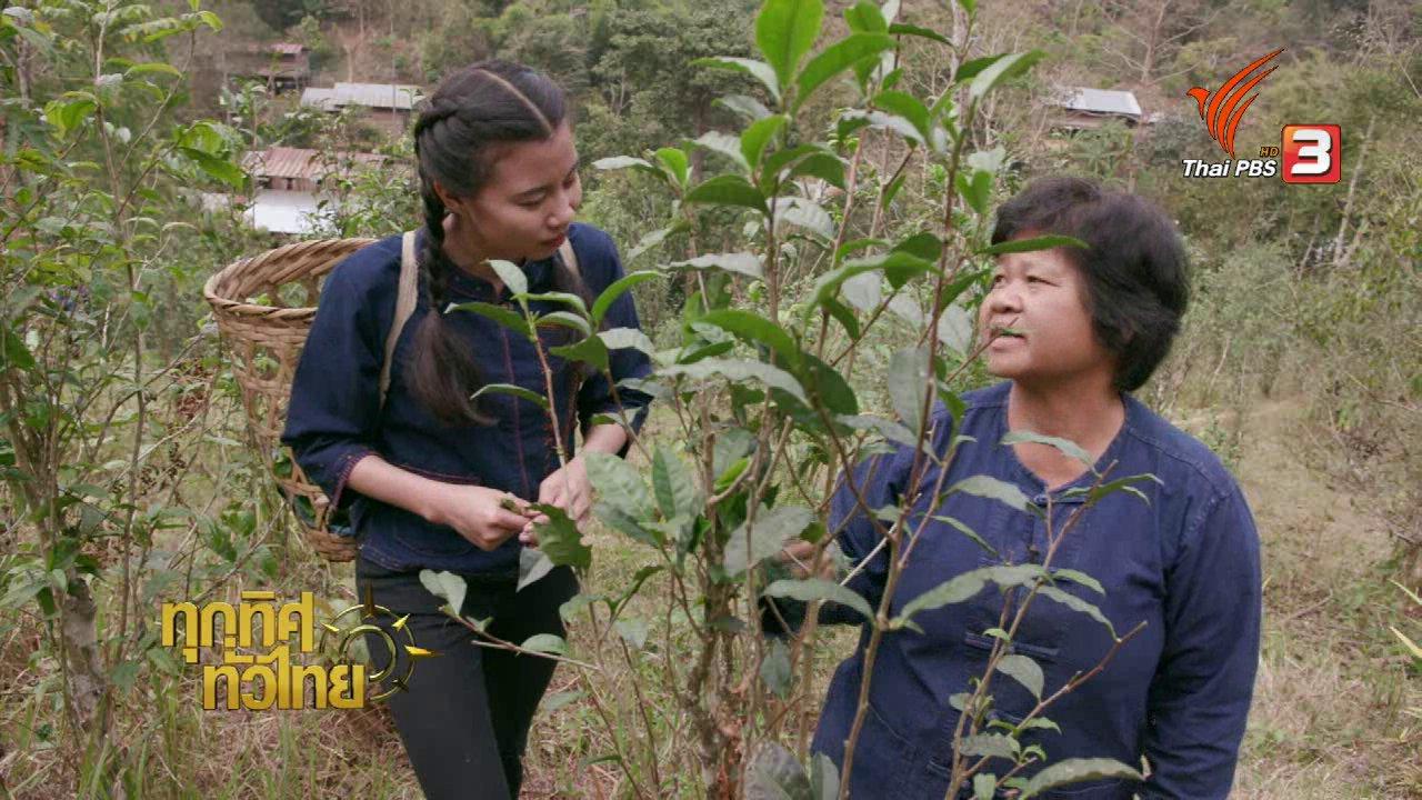 ทุกทิศทั่วไทย - ทำเมี่ยงจากใบชา