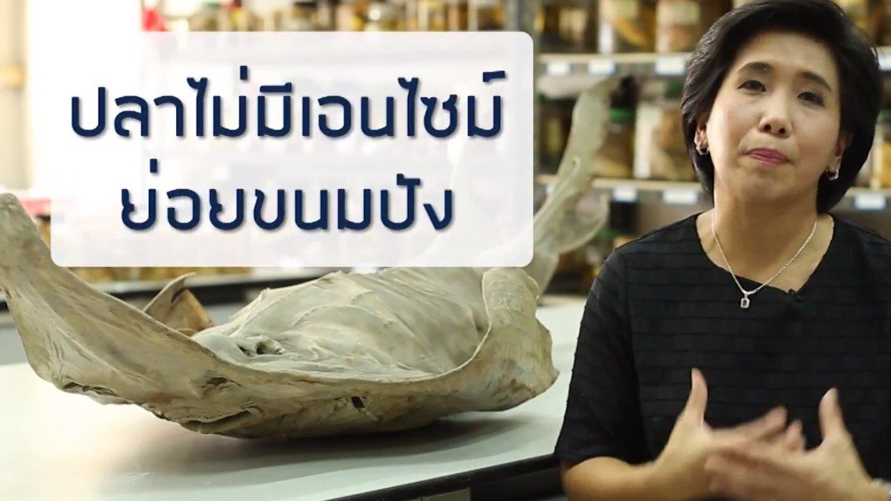 ข่าวค่ำ มิติใหม่ทั่วไทย - การให้อาหารปลาในทะเล ทำลายระบบนิเวศแนวปะการังจริงหรือไม่