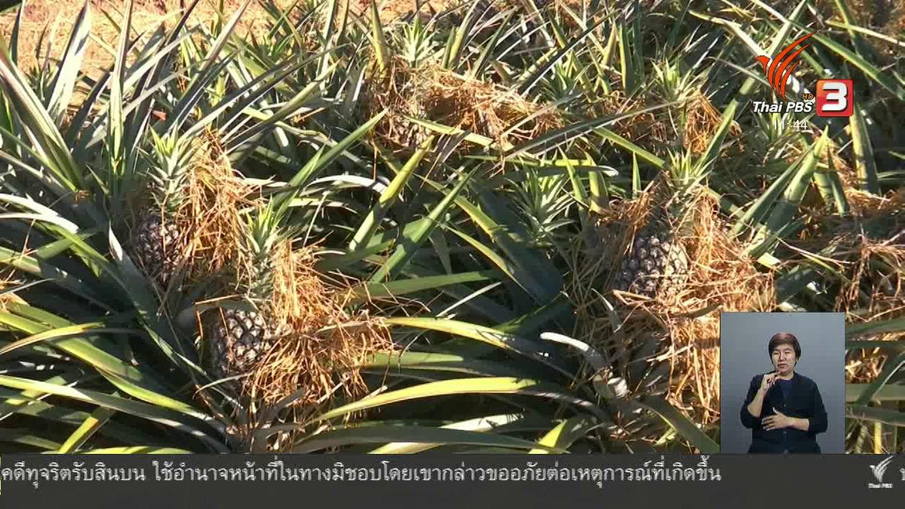 จับตาสถานการณ์ - ตะลุยทั่วไทย : สับปะรดห้วยมุ่น