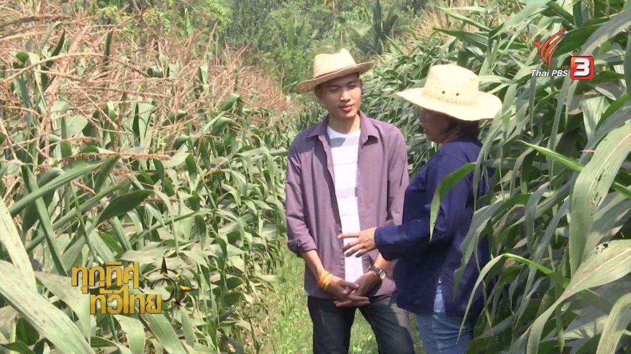 ทุกทิศทั่วไทย - ชุมชนทั่วไทย: เกษตรกรอุทัยธานีหันมาปลูกพืชใช้น้ำน้อยช่วงแล้ง