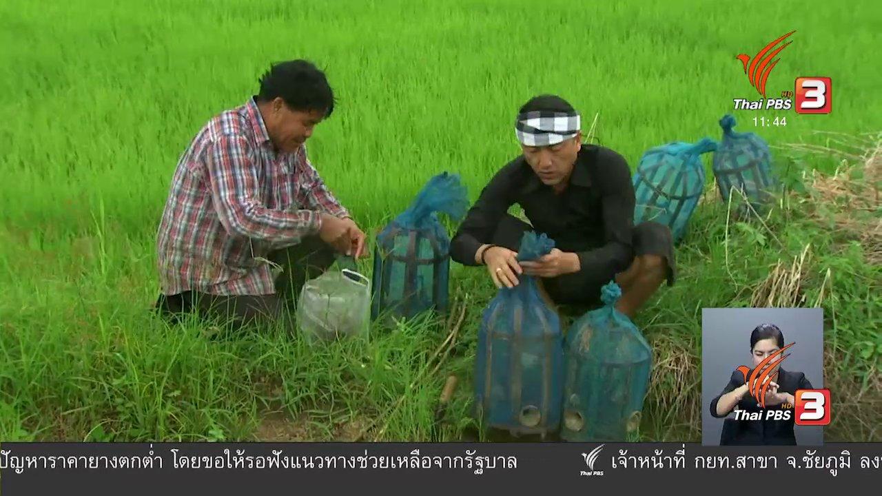จับตาสถานการณ์ - ตะลุยทั่วไทย : อีจู้กุ้งฝอย