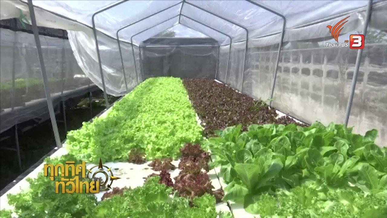 ทุกทิศทั่วไทย - อาชีพทั่วไทย : ปลูกผักไฮโดรโปนิกส์