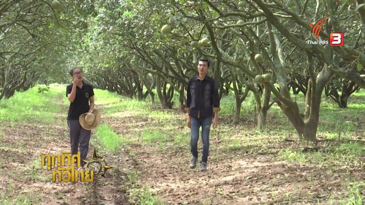ทุกทิศทั่วไทย - อาชีพทั่วไทย : การปลูกส้มโอพันธุ์ขาวแตงกวา