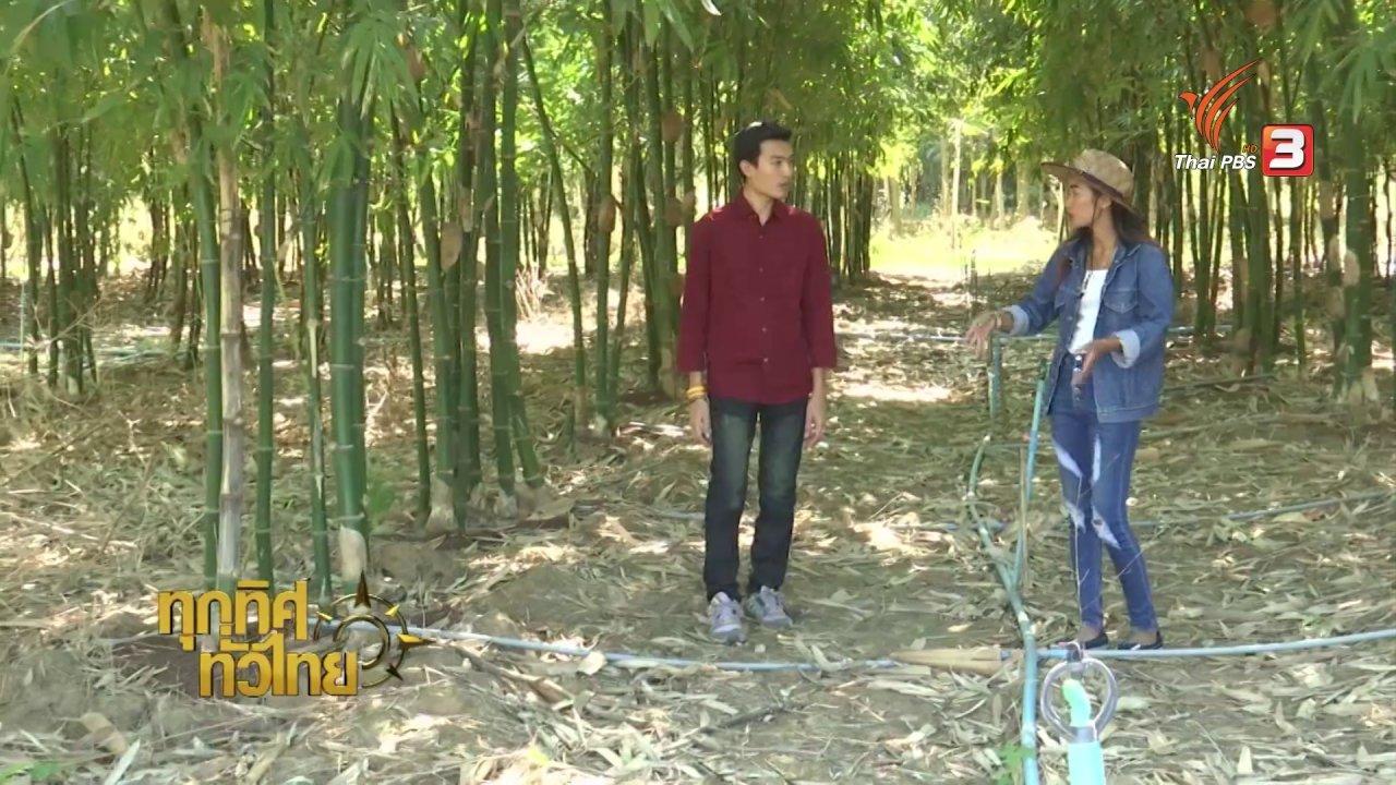ทุกทิศทั่วไทย - อาชีพทั่วไทย : การปลูกไผ่กิมซุง
