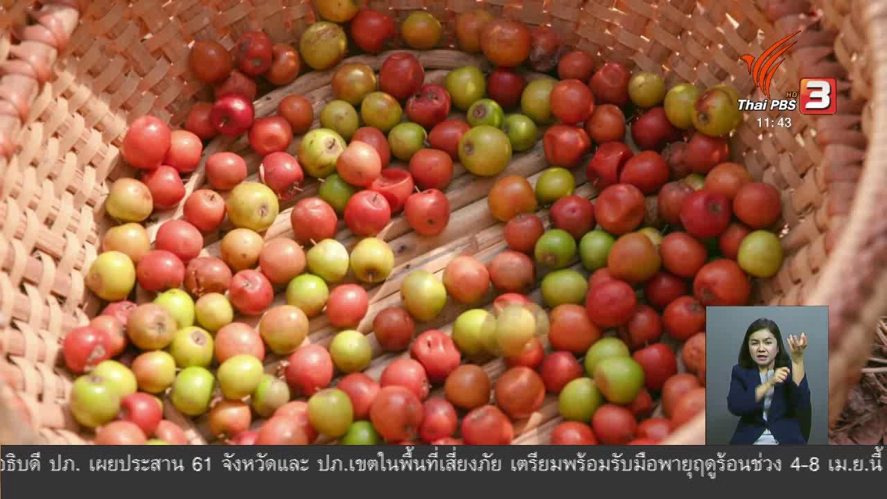 จับตาสถานการณ์ - ตะลุยทั่วไทย : แกงส้มพุทรา