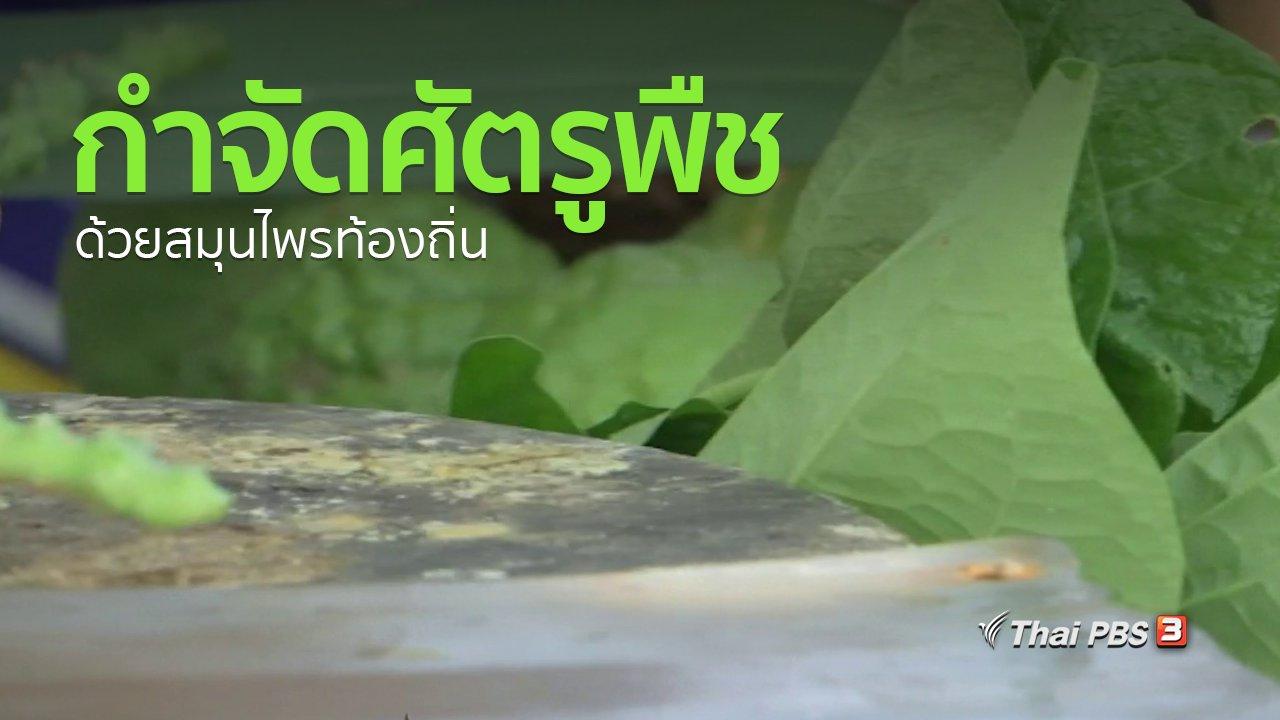 ทุกทิศทั่วไทย - อาชีพทั่วไทย : ชาวสุพรรณบุรีกำจัดศัตรูพืชด้วยสมุนไพรท้องถิ่น
