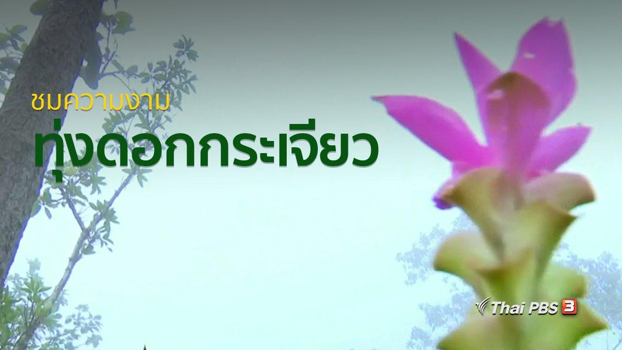 ทุกทิศทั่วไทย - วิถีทั่วไทย : ชมความงามทุ่งดอกกระเจียว