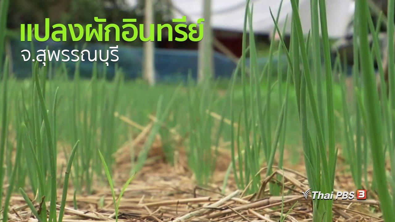 ทุกทิศทั่วไทย - ชุมชนทั่วไทย : ชมแปลงผักอินทรีย์ จ.สุพรรณบุรี