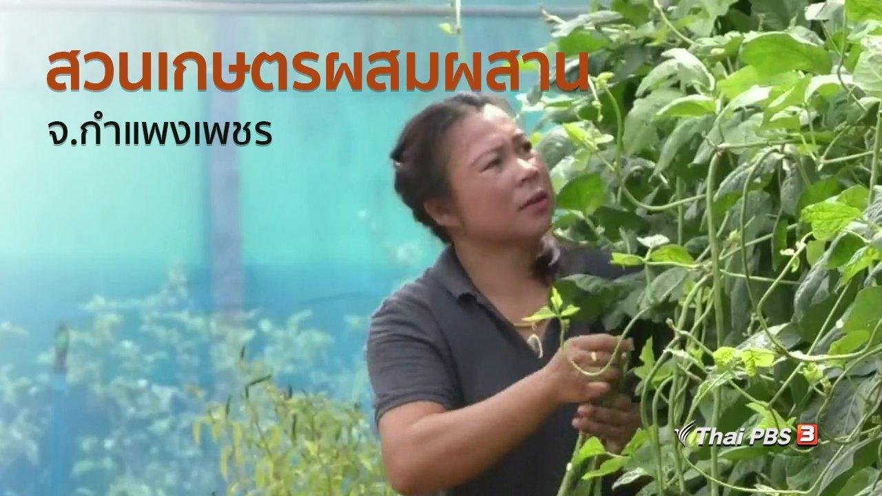 ทุกทิศทั่วไทย - ชุมชนทั่วไทย : สวนเกษตรผสมผสาน จ.กำแพงเพชร
