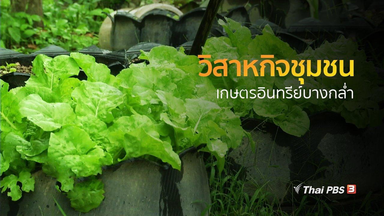ทุกทิศทั่วไทย - ชุมชนทั่วไทย :  วิสาหกิจชุมชนเกษตรอินทรีย์บางกล่ำ
